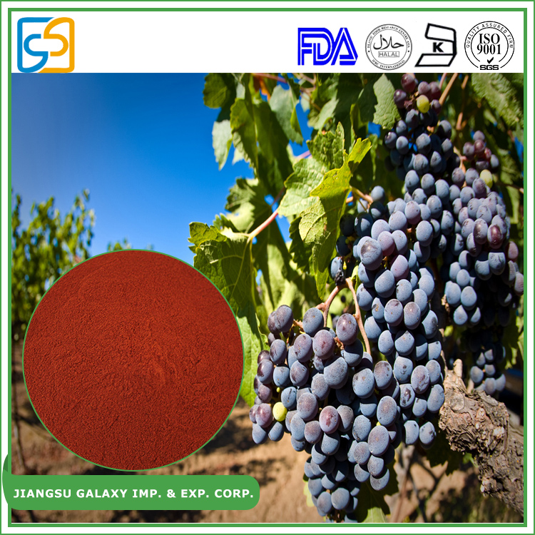 China supplier wholesale opc powder grape seed polyphenols