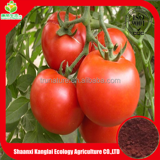 100% Pure natural plant extract tomato extract with high quality lycopene