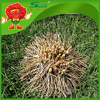 Yunnan allium hookeri supplier high quality garlic products