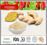 GMP certificate Pure Ginger Extract Powder, Ginger Root Extract in bulk, Gingerols 5% 6% 15% Curcumin 95%