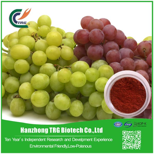 Protect live 95% opc grape seed extract p.e. with high quality