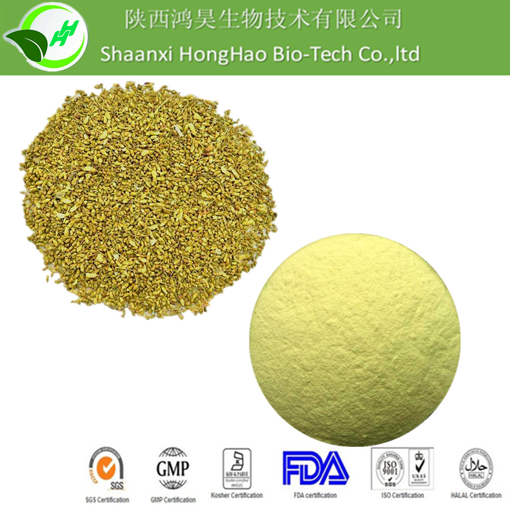 Sophora Japonica Extract Rutin 95% / Sophora Japonica Extract quercetin dihydrate 98% powder from GMP factory