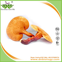 pure natural plant extracts reishi extract with 3% ergosterol / lingzhi coffee