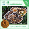 Natural Turkey Tail Mushroom Extract 30