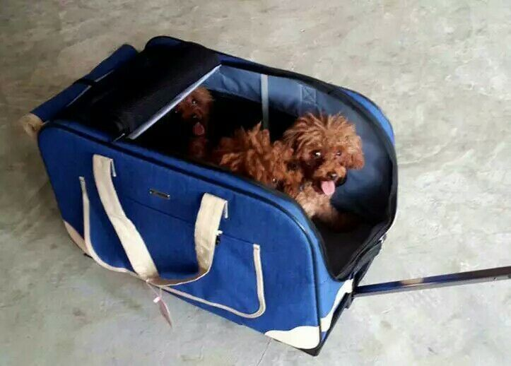 New Design Dog Outdoor Travel Carry Pet Bag Pet Cat Bags