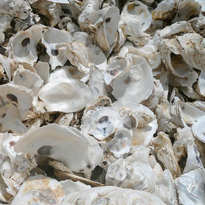 wholesale high calcium animal feed whole Sea oyster shells