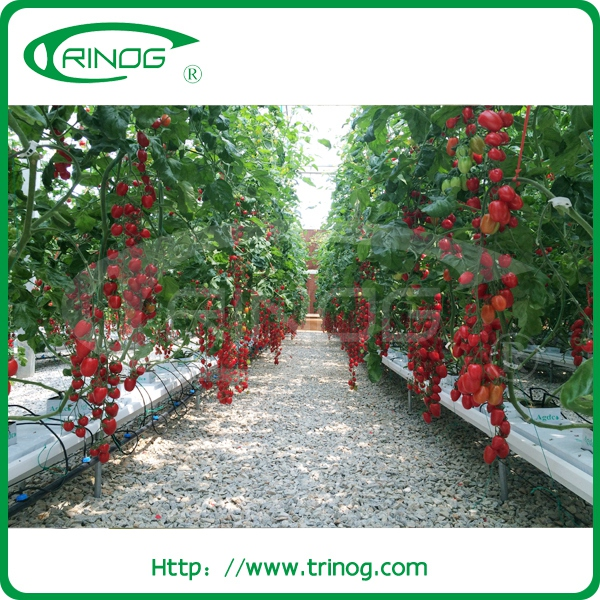 Commercial used hydroponics greenhouse for sale