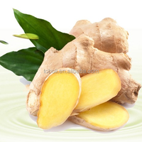 best selling wholesale fresh air dry ginger buyers