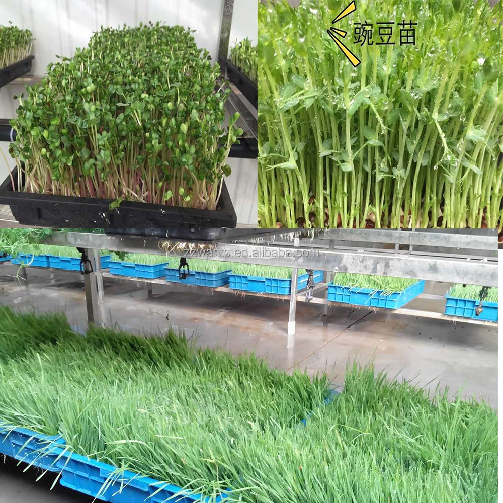 Hitech Green hydroponic trays animal fodder machine