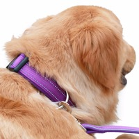 Amazon Best Seller Soft Neoprene Padded Nylon Dog Collar with Reflective strips