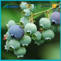 GMP standard bilberry berry seeds extract 100% natural