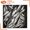 High Quality Frozen seafood mackerel