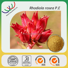 free sample HACCP KOSHER FDA supplier cosmetics raw material salidroside rhodiola rosea powder extract