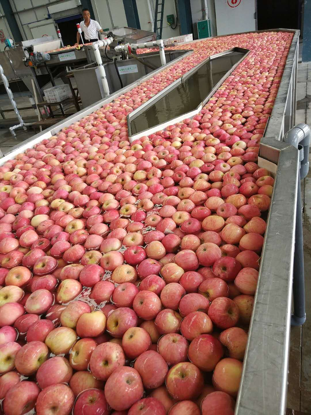 China top fuji apples