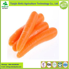 2017 new crop bulk fresh carrot