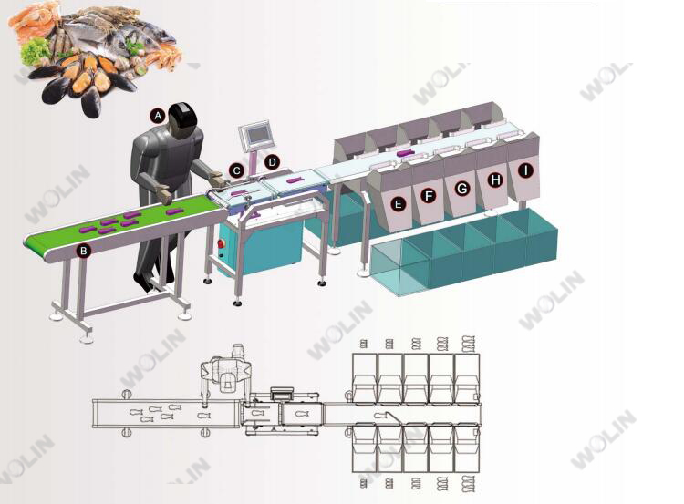 Seafood fish weight sorting check weigher conveyor belt with rejector