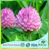 Natural Trifolium Pratense Extract with Competitive Price