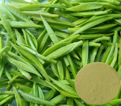 Green Tea Catechins Extract / 20%~70% Catechins / 10%~40% EGCg