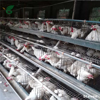 Hen Laying Cage / Chicken egg layer cages / Layer chicken battery cage price For Poultry Farm In Nigeria