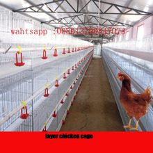 poultry chicken farm cage for sale in Ghana