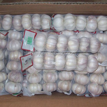 china fresh natural garlic price per ton