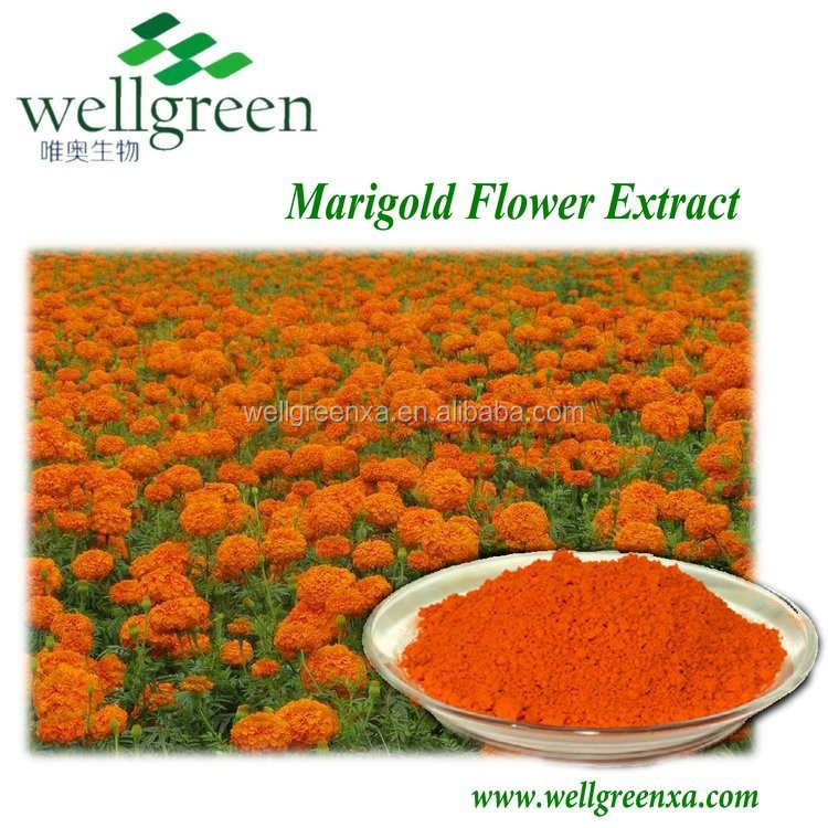 Factory supply Marigold Flower Extract for chickens feed