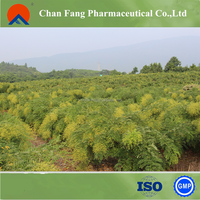 HACCP factory manufacturing sophora japonica extract plant