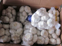 2015 new crop fresh nature garlic pure white normal white with cheap price