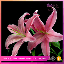 best gift perpetual flowering lilys from Yunnan China