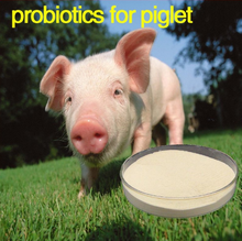 swine probiotics feed 1 immune