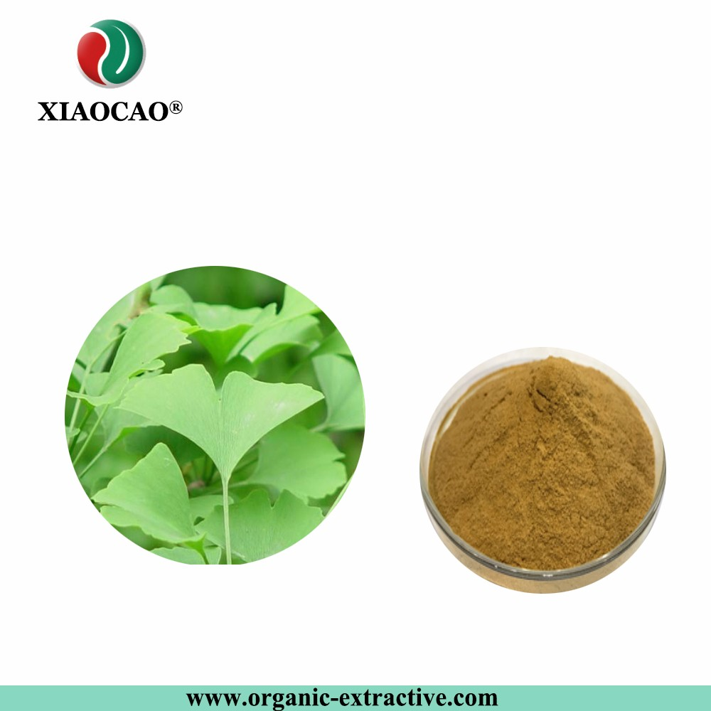 Health care food supplement natural ginkgo biloba extract powder Flavones Terpenlactone