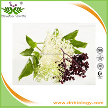 ISO9001 Factory supply pain Sambucus nigra extract and Elderberry Extract,Anthocyanidins