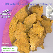 5%-99%resveratrol 100% natural giant knotweed extracted -NutraMax