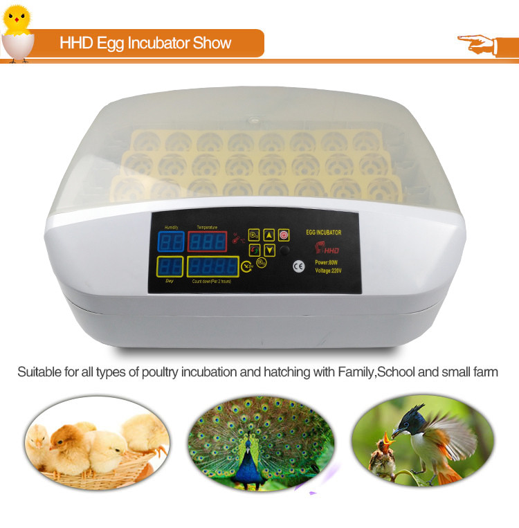 12 months warranty baby boiler price chicken egg incubator for sale sri lanka YZ-32