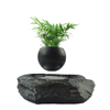Levitating bonsai air tree indoor air bonsai