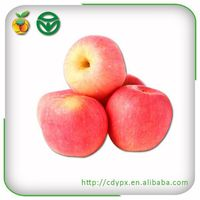 2015 crisp red royal gala apple for sale