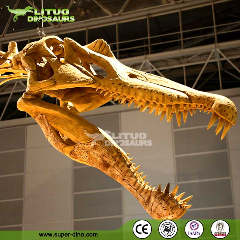 Museum Display of Spinosaurus Dinosaur Skeleton