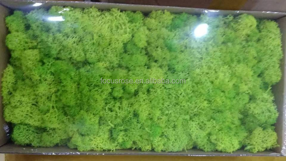 wholesale Dried moss <strong>flower</strong> for furnishing with all kinds of colors Long time Lasting preserved moss <strong>flower</strong>