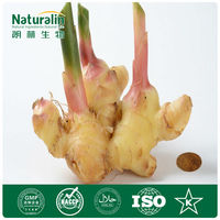 Ginger Root Extract Gingerols 5%