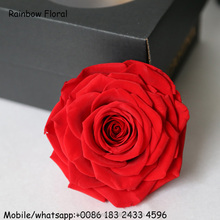 Big Size Red Preserved Rose Flower Real Touch Giant Preserved Fresh Roses