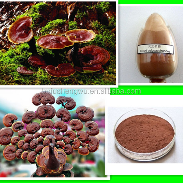 natural reishi mushroom extract/high quality reishi mushroom extract/reishi mushroom extract triterpene