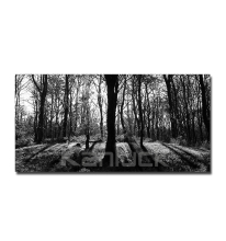 Forest Landscape Picture Photo Print on Canvas