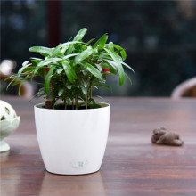 mini round indoor plastic flower pot for desktop decoration planter wholesale planter boxes