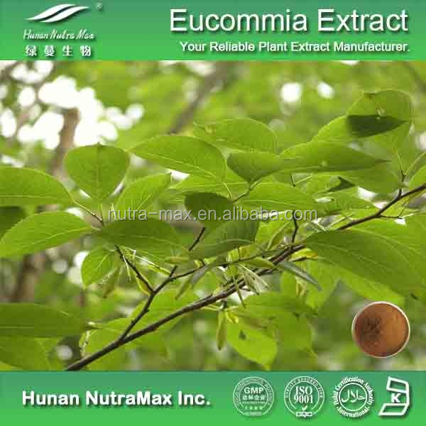 100% Natural Eucommia Leaf Powder Extract, Chlorogenic Acid 10% 20% 30% 98%