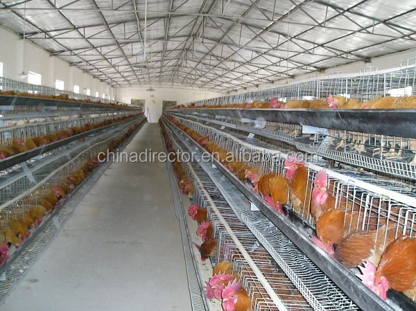 dfx brand low cost steel structure prefab poultry farm chicken layer cages