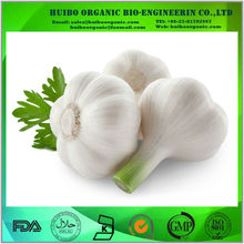 Best price bulk dehydrated garlic powder