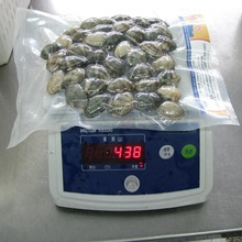 New season high quality Frozen vacuum packed Short Necked Clam