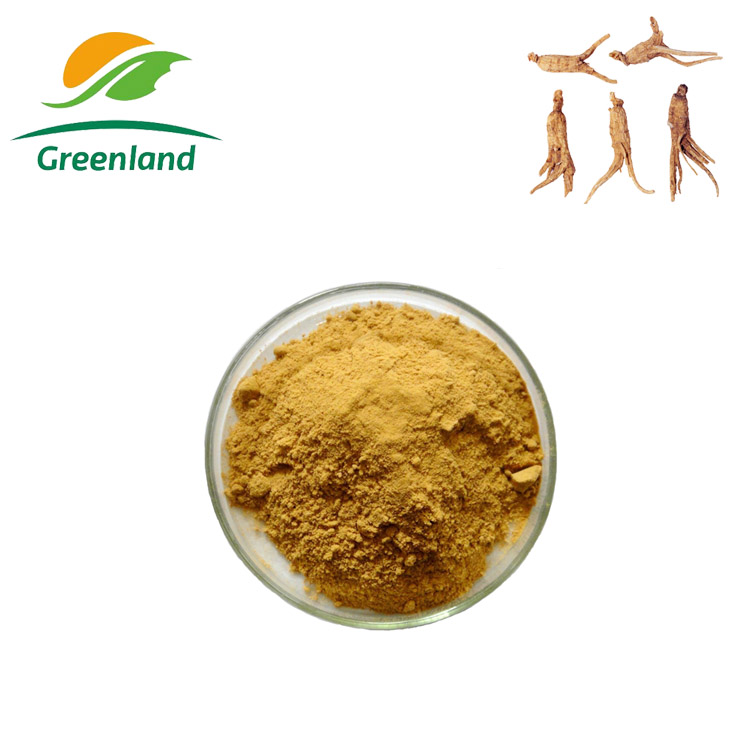 100% Natural Chinese Dong Quai Extract Angelica sinensis extract