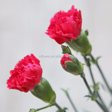 Fast delivery colorful flower spray carnation heads flowers for wholesale