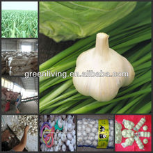 2014 new white garlic / vegetables fruits seller